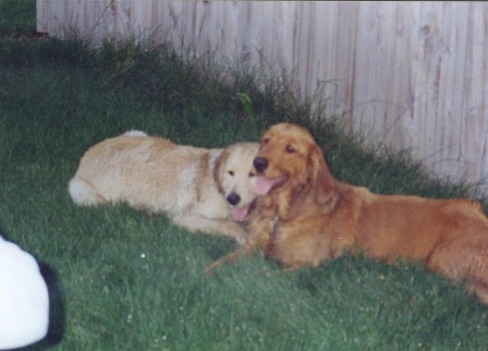 Sully and Wrigley, summer 1993