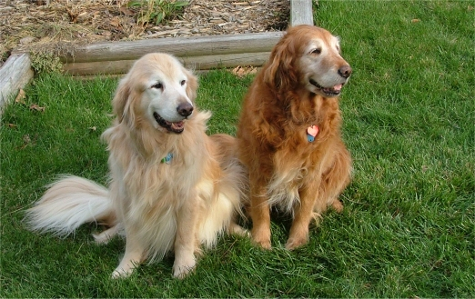 Sully and Wrigley, Thanksgiving 2004